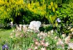 0158-Iris, Aquilegia, Labrnum, Golden chane, White Bench in Garden