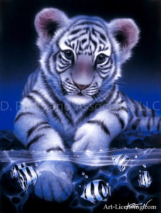 Tiger--White Baby Tiger
