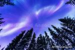 Alaska Aurora 1 (84)
