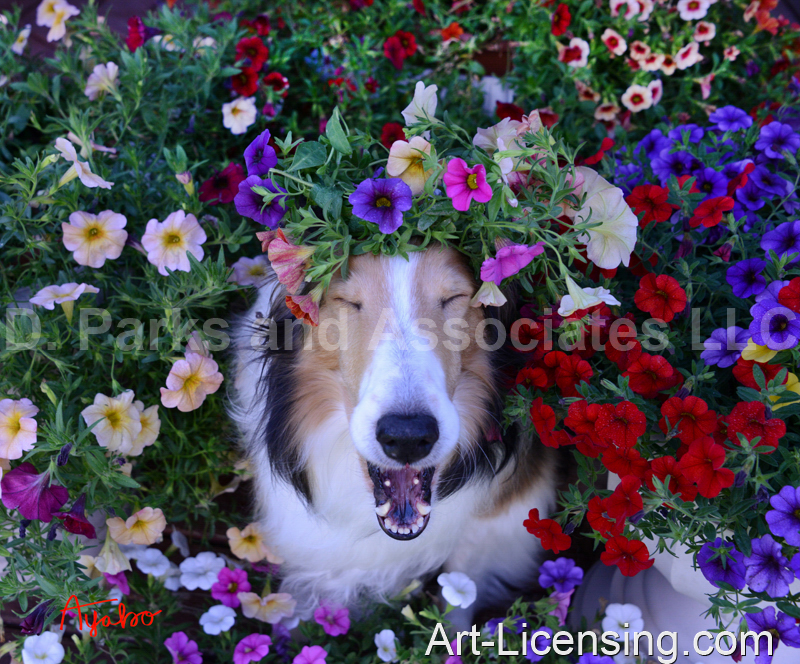 Ayako-Petunias on Sheltie Dog