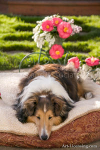 00276-Camellia with Sheltie Dog-by AYAKO