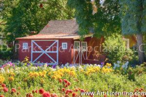 0038Art-Barn on The Dahlia Field-by AYAKO