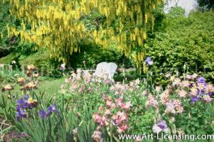 0160Art-Iris Aquilegia Labrnum Golden Chane Tree in Flower Garden-by AYAKO