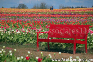030Art-Red Bench on the Tulip Field-by AYAKO