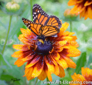 1030Art-Rudbekia and A Butterfly-by AYAKO