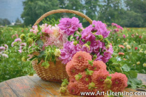 1950Art-Dahlias in the Basket-by AYAKO
