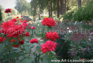 4875Art-Red Roses in the Rose Garden-by AYAKO