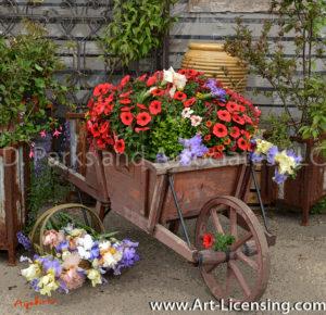 7431Art-Iris and Petunia in Wheelbarrow