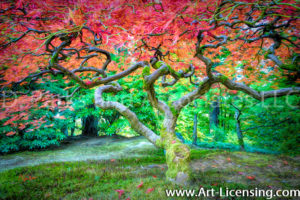7673Art-Fall Colors Maple Tree by AYAKO