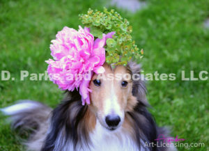 8406-Peony flower on Bill Sheltie Dog Head-by AYAKO