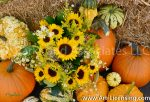 2268S-Sunflowers and Pumpkins