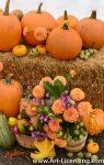 2546S-Dahlias Bouquet and Pumpkins