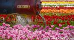 6432-Russell Engine in the Tulip Field