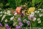 7150-Peonies-Allium-Iris-Pink and Yellow Bench in the Garden