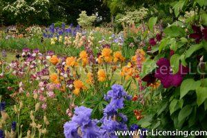 7187-Iris Spring Garden