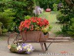 7349-Iris and Petunia in Wheel Barrow in the Garden