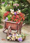7395TS-Iris and Petunia in Wheel Barrow in the Garden