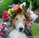 8730S-Spring Flower Crown on Bill Dog