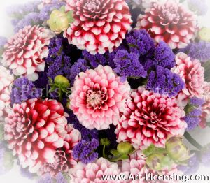 9582-Pink Dahlias