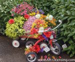 9629-Mums, Dahlias and Sunflowers on Red Wagon and Tricycle