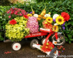 9650S-Mums, Dahlias and Sunflowers on Red Wagon and Tricycle