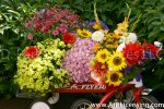 9662-Mums, Dahlias and Sunflowers on Red Wagon and Tricycle